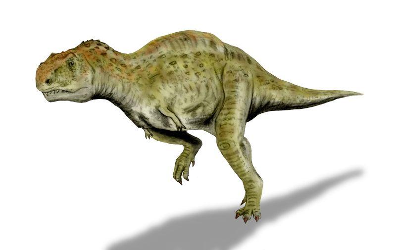 Kryptops palaias, care a trăit în Cretacicul timpuriu în Niger, a fost reconstruit cu multă imaginaţie după resturile de fosile de Sereno and Brusatte, în 2008, desenat şi colorat digital. Autor Nobu Tamura, sursă Wikipedia.