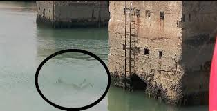 Fantoma se aruncă în apă