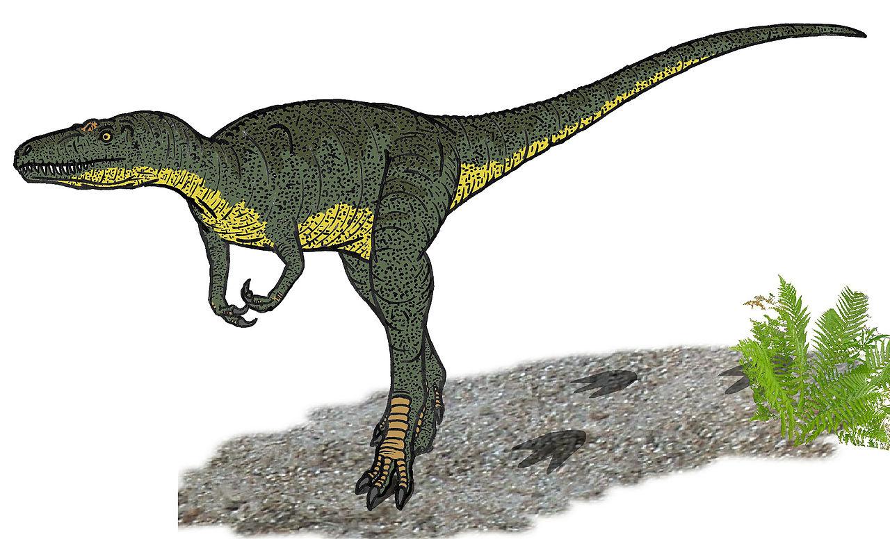O treime din speciile de dinozauri nu au existat niciodată?